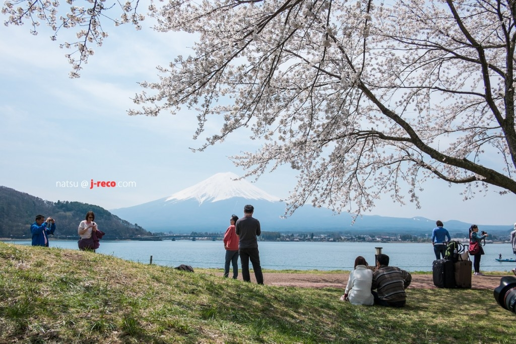 kawaguchiko-sakura-6
