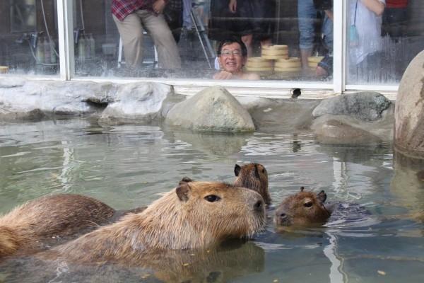 capibara003