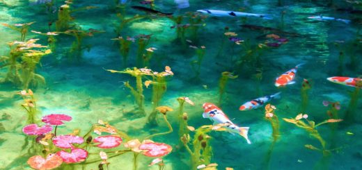 GIFU – Hồ nước trong veo đẹp tựa bức tranh nghệ thuật