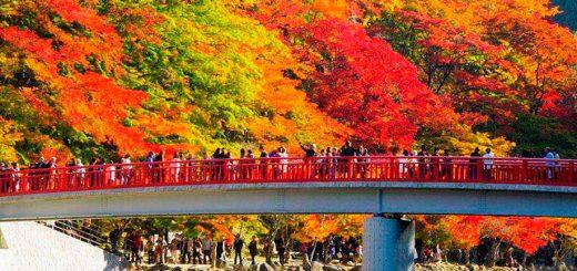Thích xem lá đổi màu! Đề nghị những nơi tốt Của Nhật Bản để ngắm những chiếc lá đầy màu sắc vào mùa thu !!
