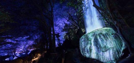 SAGA – Lạc vào không gian ánh sáng nghệ thuật của Team Lab trong khu rừng linh thiên