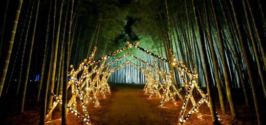 Tochigi - Khám phá không gian ánh sáng huyền ảo ở Nông trại tre Wakayama năm 2020