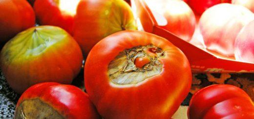 Cư dân mạng Nhật Bản sốc khi biết bí mật của những quả cà chua ngọt lịm, nhìn tưởng chỉ có thể vứt bỏ
