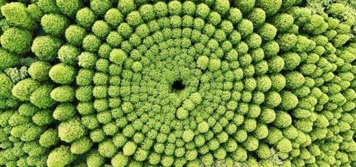Bí mật vòng vòng đầy mê hoặc bí ẩn bên trong khu rừng Nhật Bản