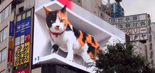 Lần đầu xuất hiện tại Tokyo, chú mèo 3D khiến người đi đường sửng sờ vì quá thật
