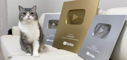 Tin được không, chú mèo Nhật này đã đạt kỷ lục Guiness