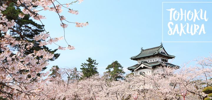 สงกรานต์สีชมพูที่... TOHOKU ร้อนนี้ก็มีซากุระ (ตอนที่ 1)