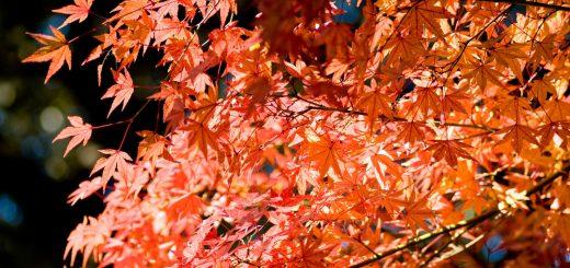 5 สถานที่แนะนำช่วงใบไม้เปลี่ยนสีในโตเกียว