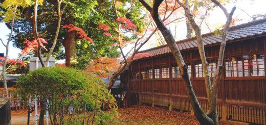 รีวิวทริปใบไม้เปลี่ยนสีที่วัด Hondoji จังหวัด Chiba