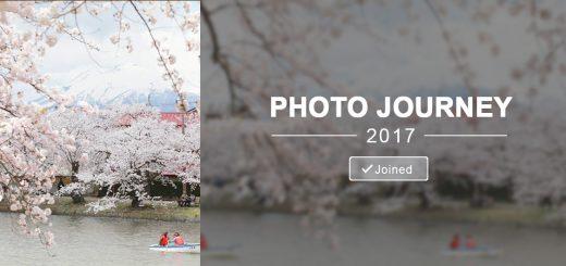 Sakura full bloom