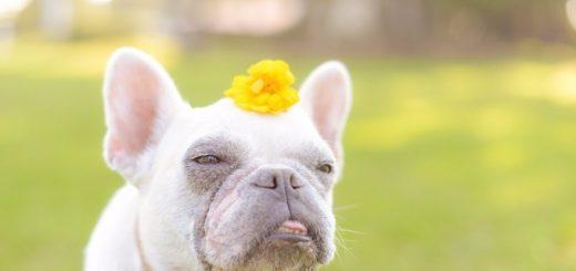 คนรักน้องหมา!!  อย่าพลาดนิทรรศกาลแกลอรี่น้องหมาสุดคิ้วท์ในอิริยาบทหลากหลายที่เห็นแล้วต้องยิ้มตาม
