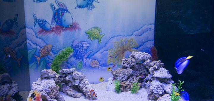 เพลิดเพลินไปกับเหล่าปลาสายรุ้งจากหนังสือนิทานภาพชื่อดังในรูปแบบอควาเรียมที่ AQUA PARK SHINAGAWA ถึงคริสมาสต์นี้