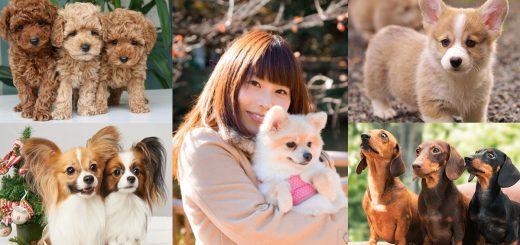 อยากรู้มั้ย! ผลโหวต 10 ชื่อสุนัขยอดนิยมที่คนญี่ปุ่นชอบตั้ง ประจำปี 2017