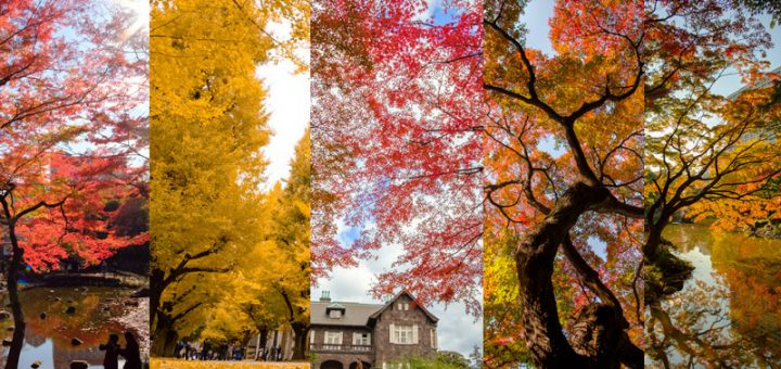 ออกไปชมใบไม้เปลี่ยนสี 5 แห่งในโตเกียวกันเถอะ