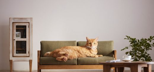 """ส่องความน่ารัก """"เฟอร์นิเจอร์ย่อส่วนสำหรับแมวโดยเฉพาะ"""" จากเมือง Okawa ศูนย์กลางแหล่งผลิตเฟอร์นิเจอร์ไม้ของญี่ปุ่น ที่ทาสแมวเห็นแล้วอยากซื้อไปให้ """"นายท่าน"""" ใช้!"""