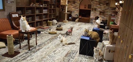 ทาสเหมียวไม่ควรพลาด!! อย่าลืมแวะไปเทศกาลแมวเหมียวที่คิจิโจจิ & แนะนำย่านยานากะที่คนรักแมวควรลองเที่ยวสักครั้ง