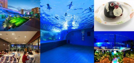 Sunshine Aquarium เปิดโซนใหม่ช่วงกลางคืนเอาใจนักท่องเที่ยวด้วยการจัดโต๊ะโคทัตซึ ชมการจัดไฟตระการตาและโชว์มากมาย