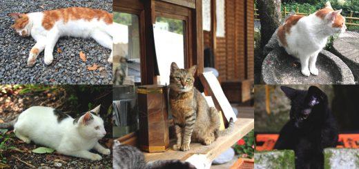 เหล่าทาสเหมียวห้ามพลาด! 7 สถานที่ในเกียวโตที่สามารถท่องเที่ยวไปพร้อมๆ กับใกล้ชิดเหล่าน้องแมวได้อย่างจุใจ