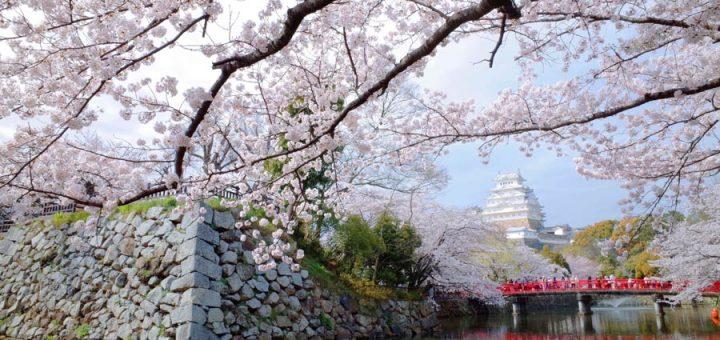 8 สถานที่ชมซากุระสวยจนลืมหายใจในญี่ปุ่น พลาดไม่ได้แล้ว!!! (แถมท้ายพยากรณ์ Full Bloom ซากุระ 2018)