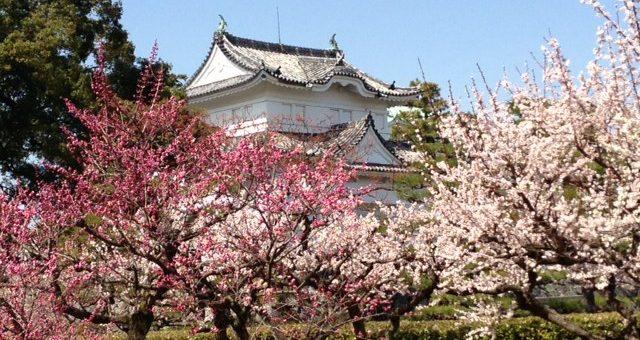 Top 3 จุดชมซากุระที่นาโกย่า มีที่ไหนบ้างตามไปดูกัน
