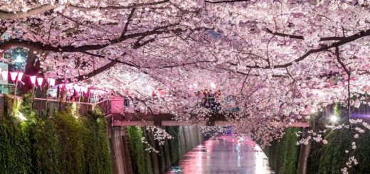 แนะนำสวนสาธารณะที่ชมซากุระได้สวยและงดงามสุดที่โตเกียว
