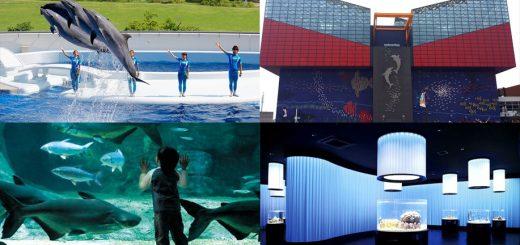Top 4 อควาเรี่ยมในคันไซที่ควรไปเปิดประสบการณ์โลกใต้ทะเลสีฟ้าคราม