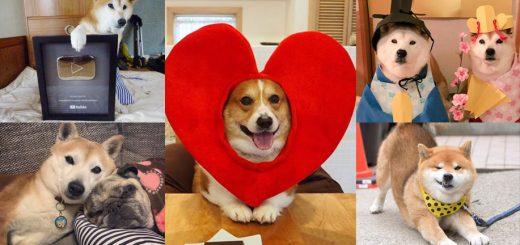 ปีจอทั้งทีต้องมีความสุข รวมพลสุนัขเซเลปประเทศญี่ปุ่น ที่คุณจะต้องยิ้มให้กับความน่ารักอย่างห้ามไม่อยู่!!