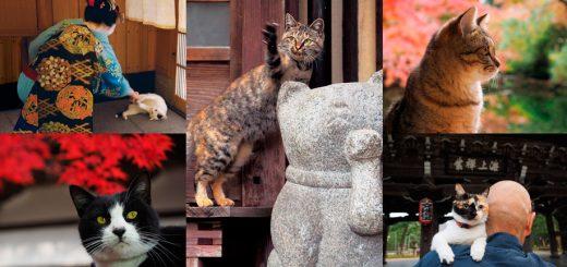 """ชมความงดงามของเกียวโตทั้ง 4 ฤดูกาลพร้อมความน่ารักของแมวเหมียวผ่านนิทรรศการภาพถ่าย """"Neko no Kyoto"""" กว่า 180 ภาพ ตั้งแต่ปลายเดือน มี.ค. นี้"""