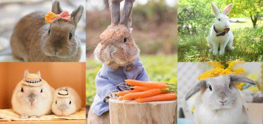 """คนรักกระต่ายต้องมา! """"Usagi Symbol Exhibition"""" งานรวมเรื่องน่ารักต่างๆ ที่เกี่ยวกับกระต่ายของญี่ปุ่น ไปจนถึง Peter Rabbit จัดเต็มทั้งภาพถ่ายและของใช้คิ้วท์ๆ ที่ห้าง Shizuoka PARCO เม.ย. นี้"""