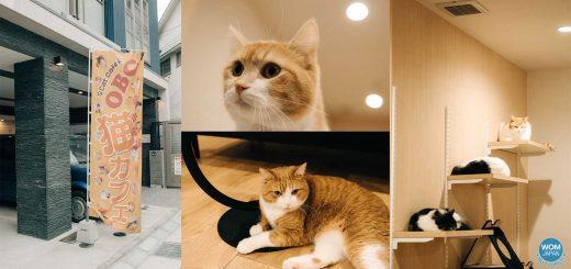 เอาใจเหล่าทาสแมว! ขอพาไปแนะนำร้าน Cat Cafe OBC ณ เมืองฟุกุโอกะ ที่เต็มไปด้วยเหล่าน้องแมวตัวอ้วนน่าฟัด!