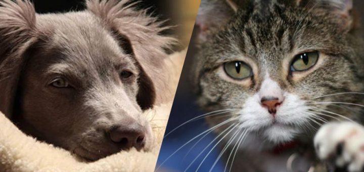รู้หรือไม่? ตั้งแต่อดีตจนถึงปัจจุบัน คนญี่ปุ่นชอบน้องหมาหรือน้องเหมียวมากกว่ากัน