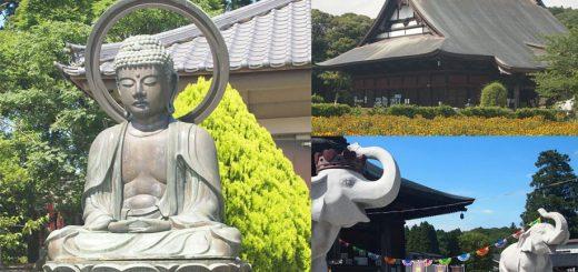 ท่องเที่ยวขอพรกับช้างน้อยให้โชคที่วัด Choufukuju พร้อมชมดอกคำฝอยบานในหน้าร้อน เมืองอิจิโนะมิยะ จังหวัดจิบะ