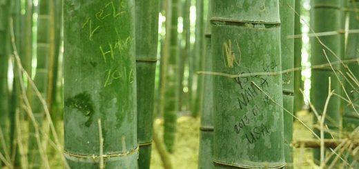 เสียงสะอื้นจากป่าไผ่ในอาราชิยามะ เมื่อนักท่องเที่ยวต่างพากันไปขีดเขียนบนต้นไม้เป็นจำนวนมาก แล้วทางการญี่ปุ่นจะมีวิธีรับมือยังไง
