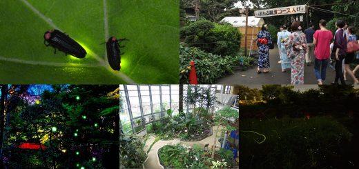5 สถานที่ในโตเกียวที่คุณสามารถชมความงามของหิ่งห้อยได้ในฤดูร้อนนี้