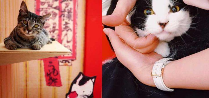 คาเฟ่แบบใหม่เอาใจสาวกแมวเหมียว! กับคาเฟ่แมวหัวคิดสร้างสรรค์ในโตเกียวที่แต่งร้านในธีมเจ้าแมวน้อยในสมัยเอโดะ!!