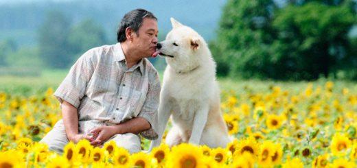 5 ภาพยนตร์ญี่ปุ่นที่จะทำให้คนรักหมาน้ำตาซึม