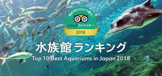 TOP 10 อควาเรียมชื่อดังที่ญี่ปุ่นประจำปี 2018