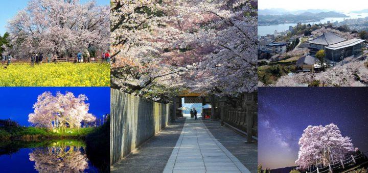 รวมสถานที่ชมซากุระ 2019 สวย ๆ จากทั่วประเทศญี่ปุ่น คิวชู-ชูโกกุ-คันไซ