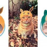 จะน่ารักขนาดไหนเมื่อน้องแมวแปลงร่างเป็นโปเกม่อน! Cute Cute Cat Hoods หมวกน่ารัก ๆ สำหรับน้องแมววางขายแล้วจ้า~