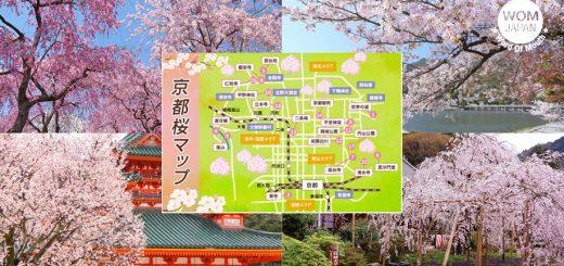 กางแผนที่ 18 สถานที่ท่องเที่ยวชมซากุระ 2019 ในเกียวโต
