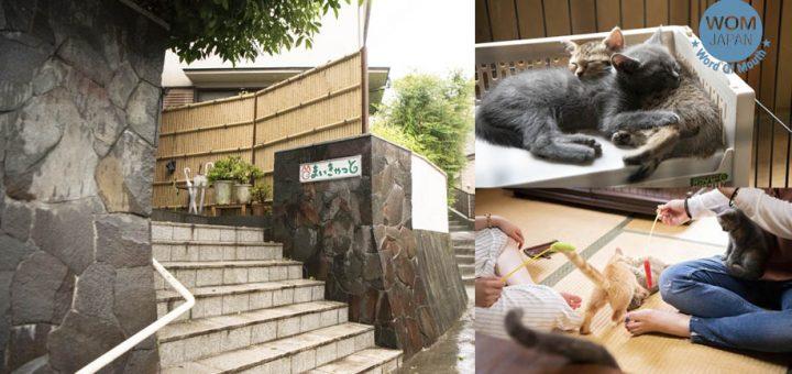 โรงแรมสไตล์ญี่ปุ่น 'เรียวคังแมว' ที่ให้สาวกแมวได้พักผ่อนชิว ๆ กับน้องแมว