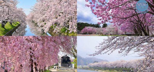 รวมสถานที่ชมซากุระ 2019 สวย ๆ จากทั่วประเทศญี่ปุ่น : จูบุ-คันโต-โทโฮคุ