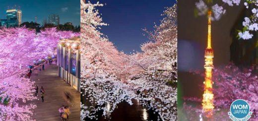 เปลี่ยนบรรยากาศชมซากุระ กับ 9 สถานที่ชมซากุระยามค่ำคืนรอบโตเกียว