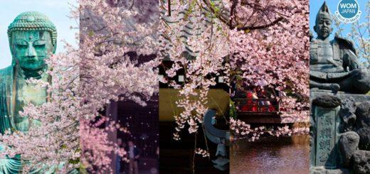 Kamakura Best Sakura Spot ! ปักหมุด 5 จุดชมซากุระแสนสวยในปี 2019