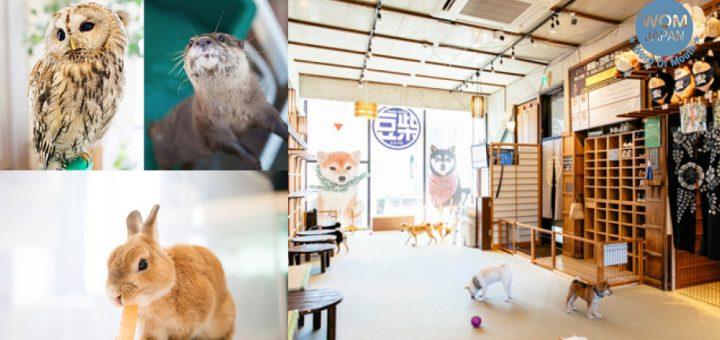 ปักหมุด 5 คาเฟ่สัตว์น่ารักใน Harajuku ! ขนมาหมดทั้งสุนัข กระต่าย และอื่น ๆ อีกมากมาย