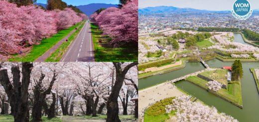 รวมสถานที่ชมซากุระ 2019 สวย ๆ จากทั่วประเทศญี่ปุ่น - ฮอกไกโด