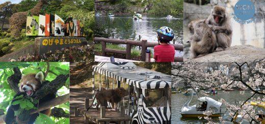 ออกจากป่าคอนกรีตกันเถอะ ! แนะนำ 5 สวนสัตว์บรรยากาศดีในโตเกียว เหมาะแก่การใช้เวลาร่วมกันในวันหยุด