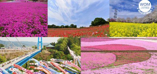 พิเศษสุด ๆ กับ 5 สุดยอด Landscape ของภูมิภาคคันโต ที่หาดูได้แค่ช่วงฤดูใบไม้ผลิเท่านั้น !
