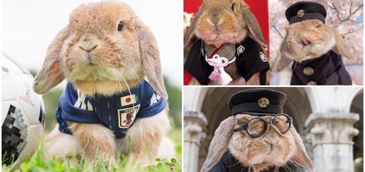 PuiPui กระต่ายเน็ตไอดอล ที่แต่งตัวมีสไตล์ที่สุดในญี่ปุ่น