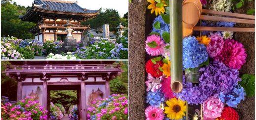 อยากชมไฮเดรนเยียต้องมาที่นี่ ! ปักหมุดเที่ยวญี่ปุ่นด้วยตัวเอง 4 พิกัดสวนสวยของ Kyoto ที่พลาดไม่ได้